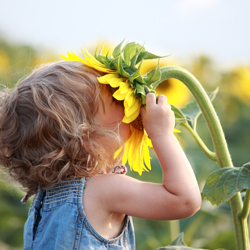 Child holding a spring sunflower
