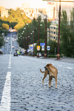 Lost dog walking on the road